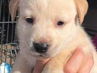 Mama Sandy pup Raja's story Please fill out an