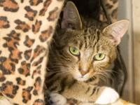 Mamacita is a sweet shy kitty who will become your dear