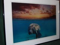Lovely photo/print by artist and photographer David