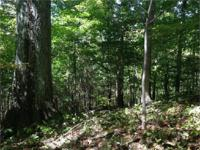 Total of 128.26 acres of huge woods property in