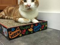 Handsome Mandarin is available for adoption! He is