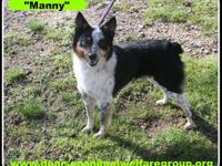 STRAY HOLD IN THE CITY POUND; 1803069 - Manny - young