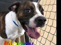 Manny's story im a male mastiff mix. I was found as a