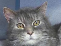 Mantra's story I'm very sweet and love to cuddle! Every