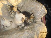 We have four kittens available. We also need to rehome