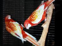 I am selling my birds. I have pairs, singles they range