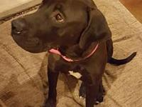 Maranda's story Maranda is a very sweet 1 year old Lab