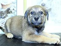 Marantz's story Check out our latest litter rescue, the