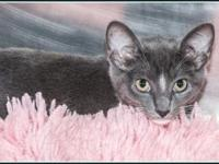 Marcel's story $97.50 FEE INCLUDES: neutering/spaying,