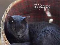 Marcie was rescued from living under a dumpster at a