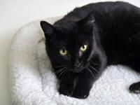 Marcie's story Meet Marcie! This lovable lady is ready