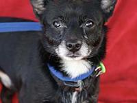 My story Marco is a tiny little chihuahua male. he is