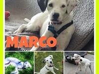 Marco's story Marco, found as a stray in south TX,