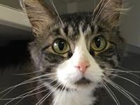 Marco's story Marco is a 5 year old black tabby with