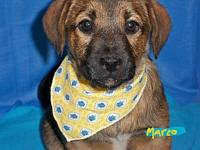 "MARCO's story ""MARCO"" is my name. I am one of 3 puppies"