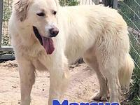 Marcus's story Marcus is a 3 year old, male, Great