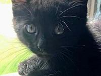 My story Marcus is a sweet, black kitten with medium