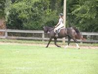 7 YEAR OLD QH MARE ABOUT 15 H , NICE MOVER , LOVES