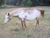 Moving need to find a good home for a working horse and