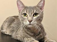 Margarita $25 Adoption Fee's story Margarita is a
