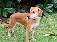 MARGE's story Marge is a sweet Beagle Mix girl that we