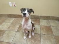 Margo's story Pit Terrier mix 7 months old Spayed