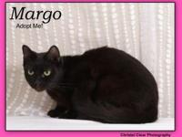 Margo's story This is Margo! She is a mellow gal who
