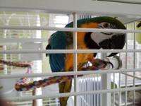 Margo is a very sweet macaw. She is about 40yrs old.