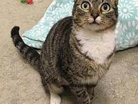 My story Margo' is a sweet 1 year old Tabby cat who