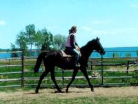 Mariah is a tall 15 year old Thoroughbred mare who