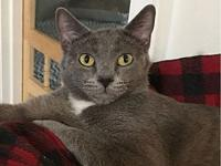 Marigold - At Adoption Center's story FOSTERED IN: