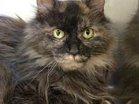 Marigold's story Marigold is an older gal looking for a