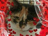 Marigold's story Come and adopt this lovie! Marigold