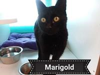 Marigold's story This sweet little girl is named