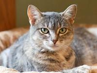 Marilee's story Marilee is an adult, spayed female cat,
