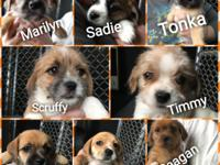 Welcome this big litter of pups to Pets Alive! All the