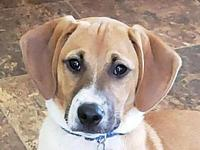 Mario's story This puppy is in Tennessee. Adoption
