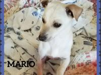 Mario is just a little cuddle bug!!!!  He is about 6-8