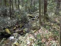 OVER 6,000 ft of Pisgah National Forest Boundary wraps