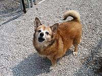 MARION's story MARION Female Spayed POMERANIAN