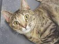 Marisol's story Estimated birth date4/09. SPAYED FEMALE