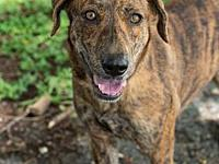 Maritza's story Maritza is a sweet, affectionate and