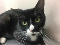 Marjory was rescued from a hoarding situation. Shes as