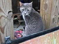 Marki's story Marki Age: 7 years old DSH/Neutered Male