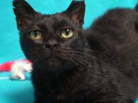 Marko is a very affectionate, loving senior who may
