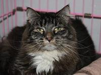 Marky's story Marky is a sweet spayed female who is