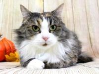 Marla's story Marla is a gorgeous 1 yea old female