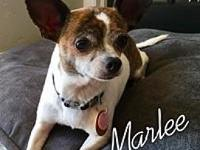 Marlee's story Marlee is a 3 year old, 6.4 lb,