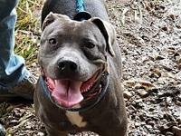 Marley's story Marley here, I am a energetic 2 year old