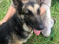 Marley's story Marley, 5, was dumped in rescue by her